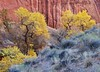 """WILLOW GULCH COLOR"""