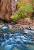 """NARROWS RAPIDS"" (Zion NP)"
