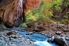 """CANYON LIFE"" (Zion NP, Utah) -"