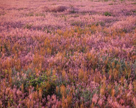 Textures in Grass III