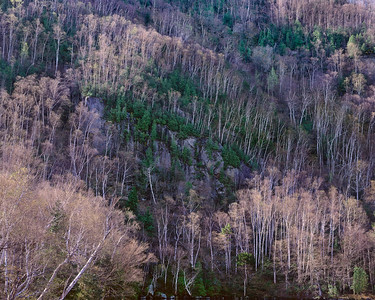 Spring Cliffside I