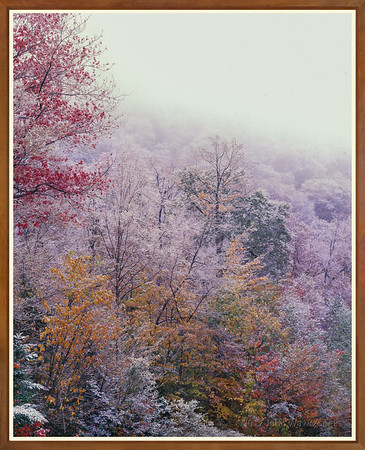 Last Leaves And First Snow II