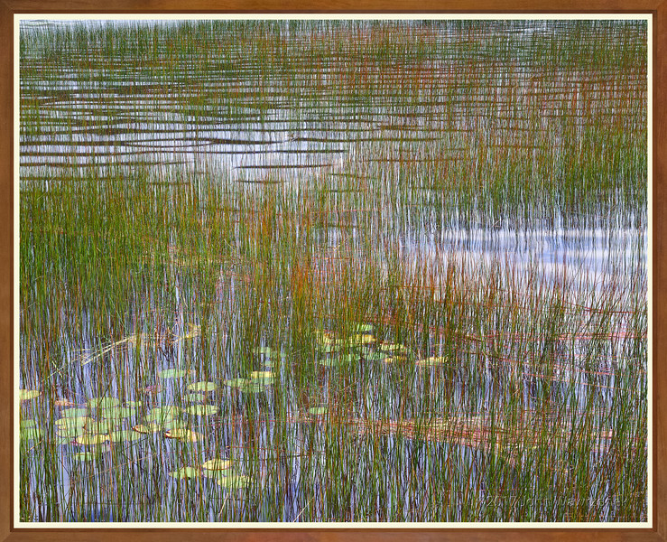 Reeds & Waterlilies III