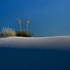 """RIPPLES in TIME  New Mexico.  The  late afternoon light emphasizes the wind-shaped ripples on the landscape in White Sands National Monument near Alamogordo, New Mexico.  The blades of a native yucca plant will remain green through the winter even though a neighboring plant has already gone dormant in early November.  Prints nicely to 24"""" on the long side.  Click on this preview image for a full-screen, detailed view.  nd"""