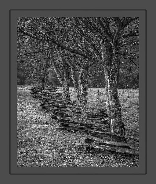 FENCELINE in CADES COVE