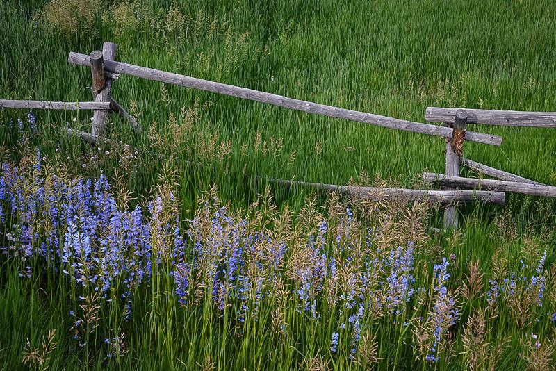 MEADOW  FENCE  WILDFLOWERS