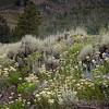 WILDFLOWERS AT CATARACT LAKE