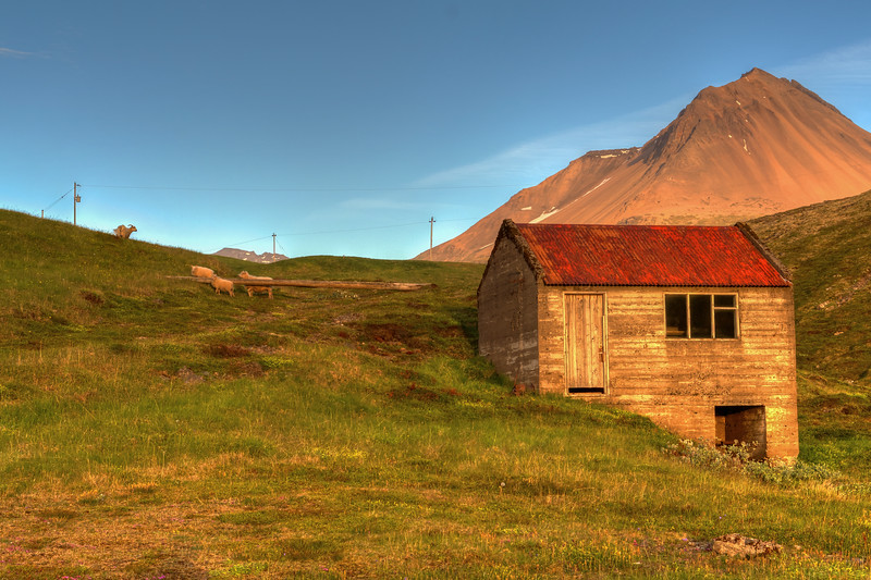 Sheep With Hut, South Iceland