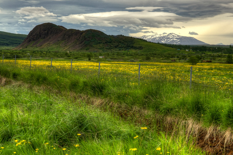 Meadow With Fence, South Iceland