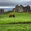Horse And Abandoned Farmhouse, South Iceland
