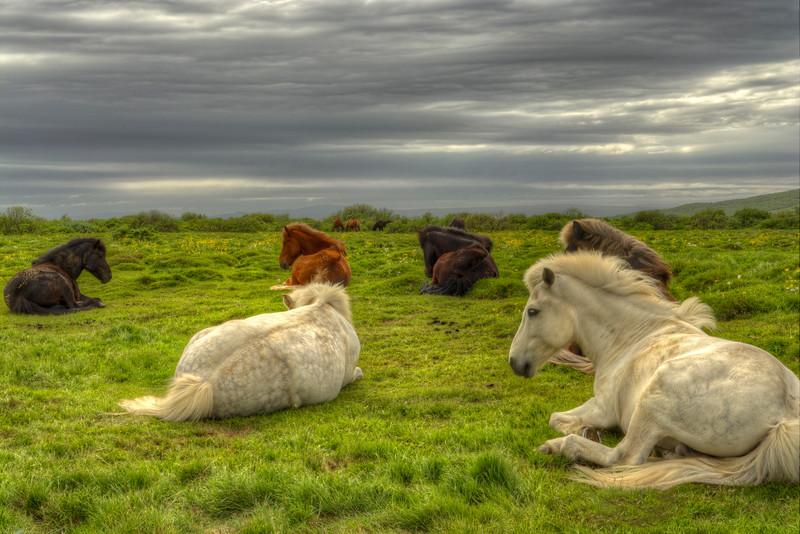 Sleepy Horses, Reykjanes Iceland