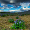 Clouds And Lupins, South Iceland