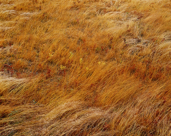 Brown Grass & Morning Dew IV