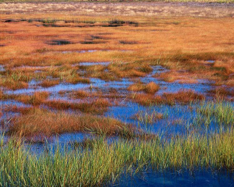 Inland Marsh
