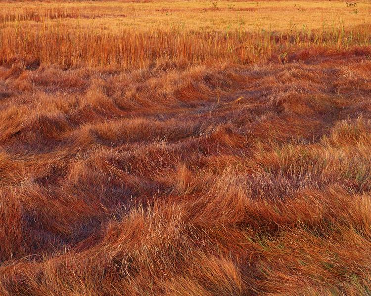 Salt Meadow II