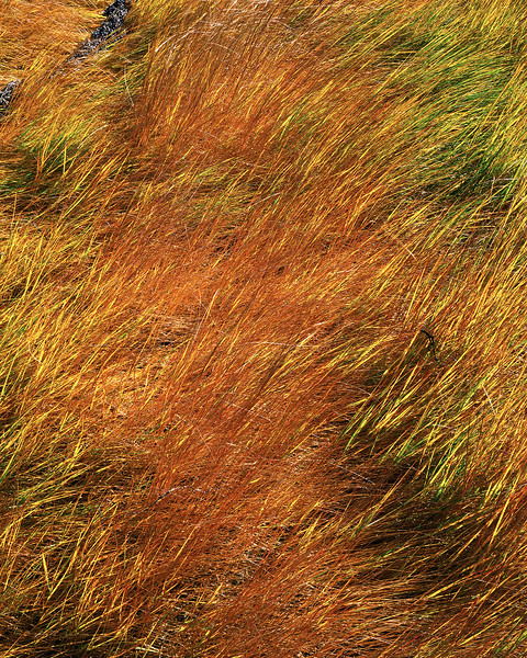 Yellow Grasses