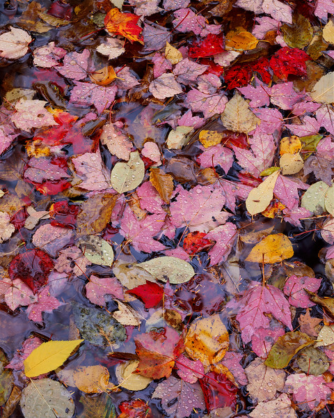 Textures In Leaves