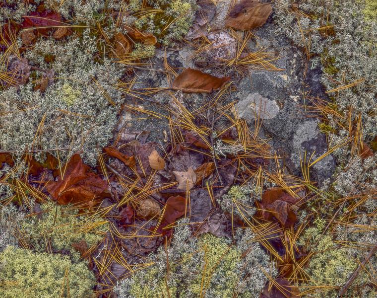 Lichens, Stone & Pineneedles
