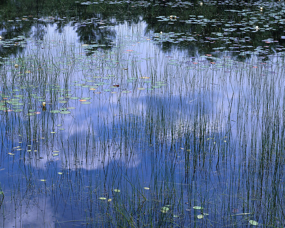 Lily Pond With Clouds