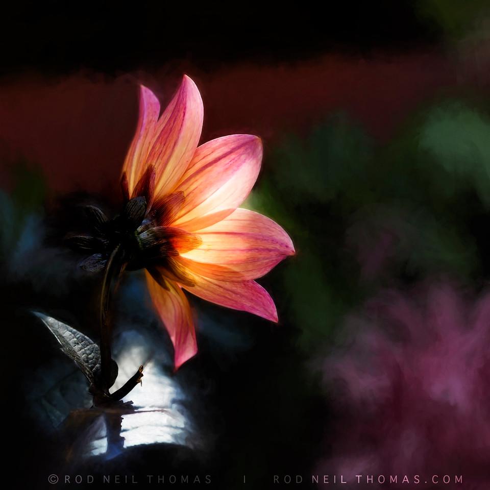 THE LIGHT OF A FLOWER