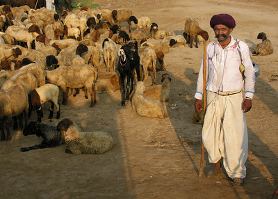 RABARI SHEPHERD