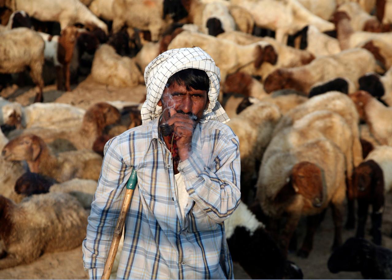 SHEPHERN - LITTLE RANN OF KUTCH