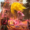Mathura street procession yields Holi color