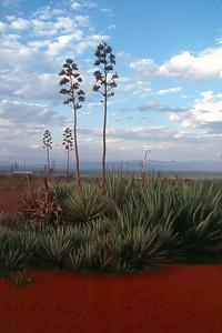 SISAL PLANTATION - SOUTHERN MADAGASCAR
