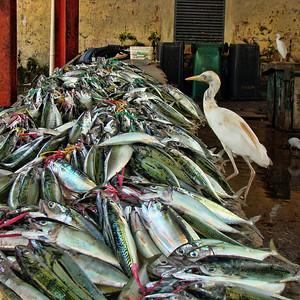 VICTORIA FISH MARKET - MAHE