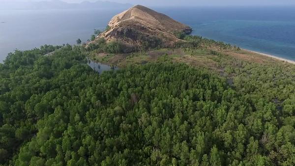 mangrove 2.mp4