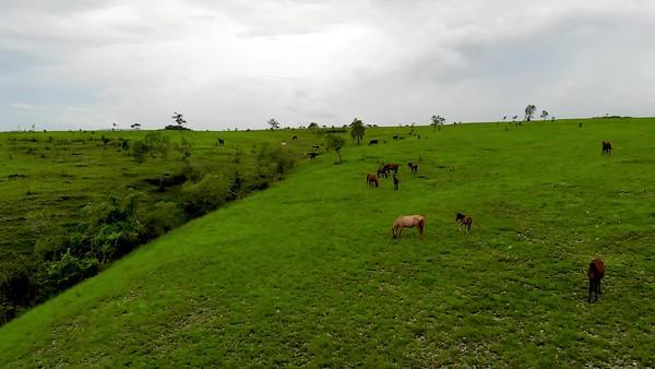 padang sabana (2).mp4