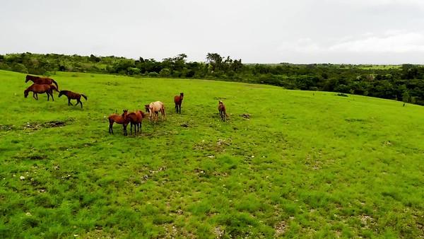 padang sabana (3).mp4