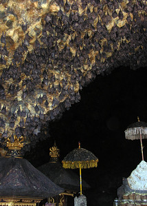 BAT CAVE - EAST BALI