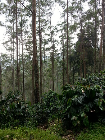 Java Frinsa Estate