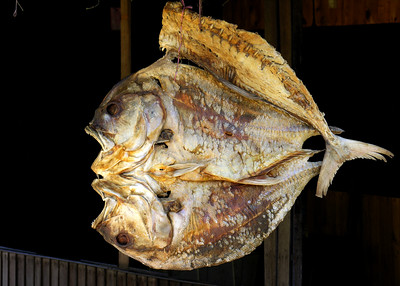MAKASSAR FISH MARKET