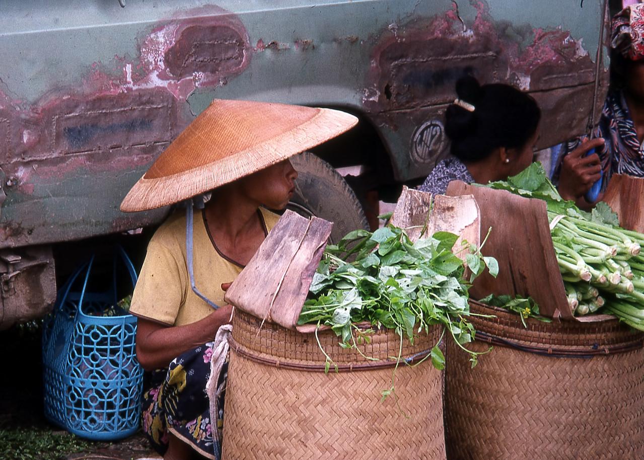 SULAWESI - INDONESIA