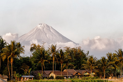 Java,  © Luis Courtot