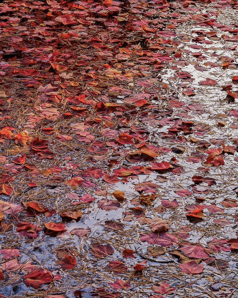 Leaves On Water I