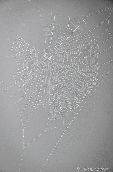 Designer Web—Possibly created by Zygiella spp.