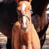 Top Filly Balou Du Rouet x EM Christiahna 5040