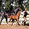 Top Filly Balou Du Rouet x EM Christiahna 5049