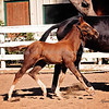 Top Filly Balou Du Rouet x EM Christiahna 5047