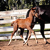 Top Filly Balou Du Rouet x EM Christiahna 5043