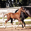 Top Filly Balou Du Rouet x EM Christiahna 5032