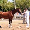 AHS Don Felina 9875