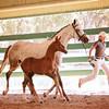 AHS 14 Wild Dance:Erresistible R colt 2263