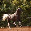 OldNA 14 Kiss My Royal Spots 5803