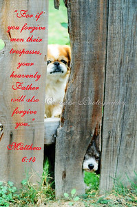MATTHEW 6:14 GUARD DOGS OCEANSIDE CALIFORNIA