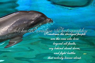STRONGEST PEOPLE, WHOLPHIN, SEA LIFE PARK, OAHU