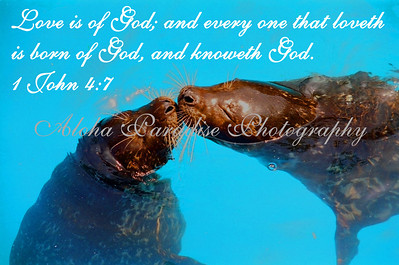 "1 JOHN 4:7 ""SEALED WITH A KISS"" SEA WORLD SAN DIEGO"